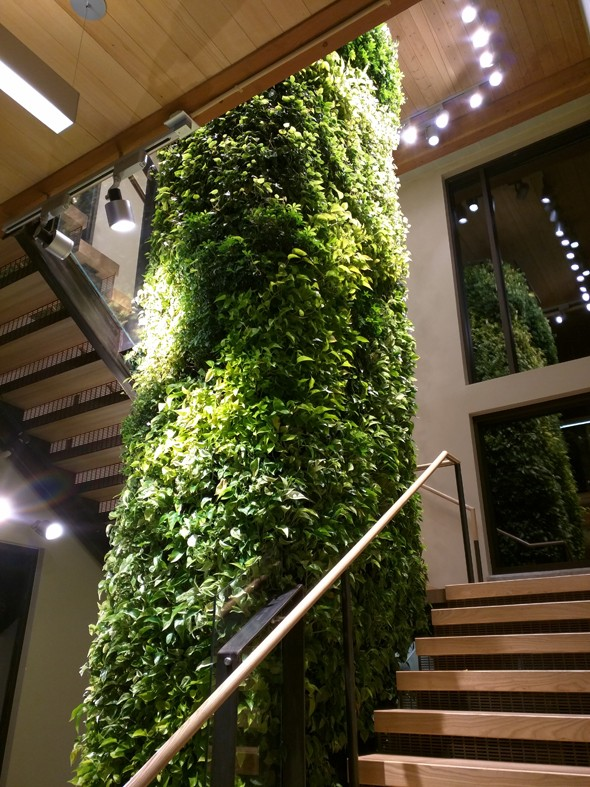 """Indoor plant at the """"The Pavilion"""", more evidence of environmentalism on the CSU campus!"""